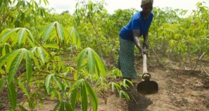 Tanzanian Agri Stakeholders Prepared For 2016 Agribusiness Summit