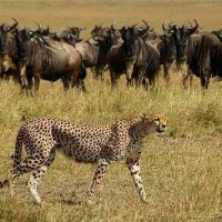 Wildlife at Serengeti Np