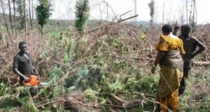Kilimanjaro Deforestation A Serious Issue, Minister Urges Strict Action