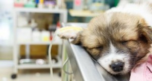 5 Benefits of Digital X-Ray in the Veterinary Clinic