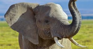 how-demand-for-ivory-could-be-reduced-globally-to-save-elephants